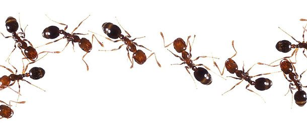 Insects Bug Muggers Pest Control Pittsburgh