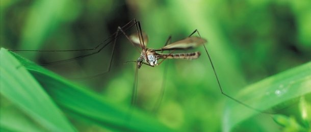 Mosquito Bug Muggers Pest Control Pittsburgh