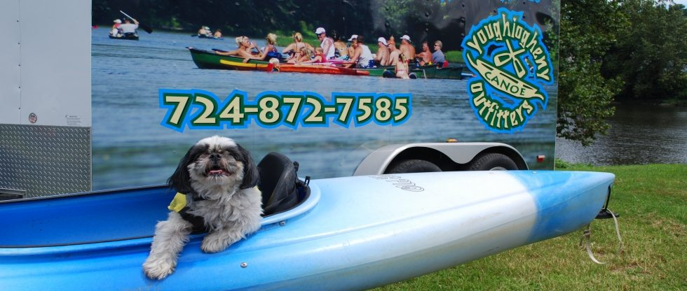 Skunk in Kayak Youghiogheny Canoe Outfitters Kayaking Pittsburgh