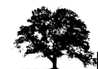 Pusateri Brothers Tree & Landscaping Service Logo